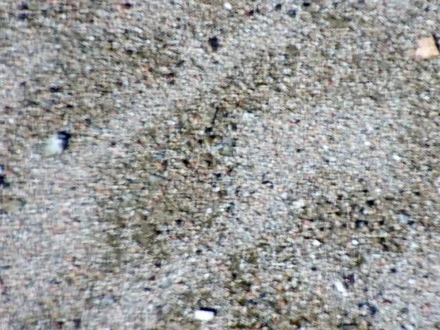 weather Webcam Porquerolles