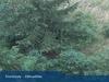 webcam Donovaly (Park Snow)